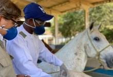 Photo of PESQUISA: Soros produzidos por cavalos têm anticorpos potentes para covid-19