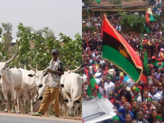IPOB Places Ban On Rearing And Consumption Of 'Fulani' Cattle In South-East