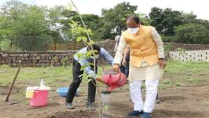 Chief Minister Shri Chouhan planted saplings for 206th consecutive day