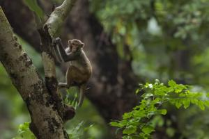 Money Rain: Monkey snatched a bag full of Rs 2 lakh from lawyer in Bareilly, rained money on people