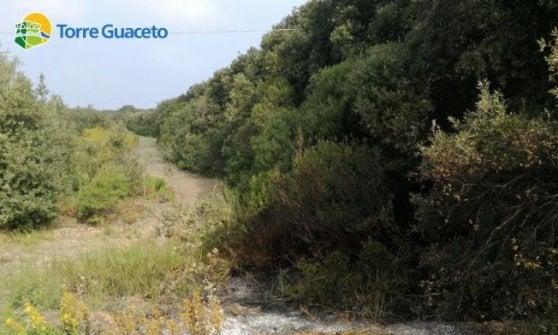 """Torre Guaceto, fuoco nell'oasi marina protetta: """"Temiamo che si tratti di un atto doloso"""""""