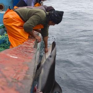 In mare con i pescatori di frodo: la mattanza di delfini e squali in Perù