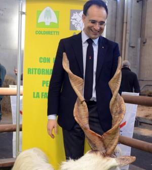 "Pandoro argentino e 'Parmesao' brasiliano. I falsi ""made in Italy"" ci costano 60 miliardi"