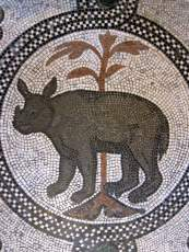 Image result for rinoceronte san marco