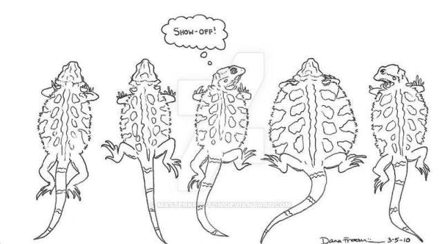 bearded dragon body language - pancaking