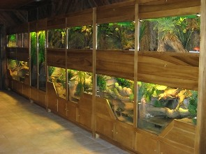 Reptile room with wall of terrariums