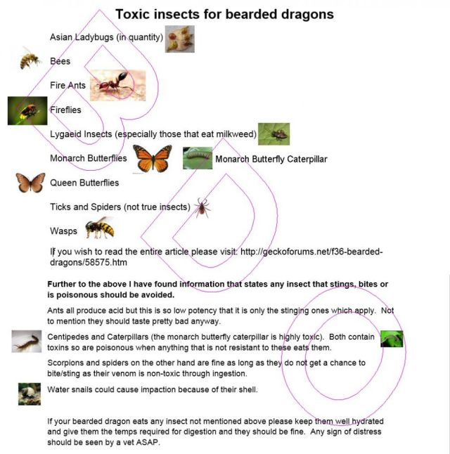 toxic bearded dragon bugs