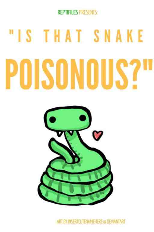 Blog graphic - how to tell if a snake is poisonous