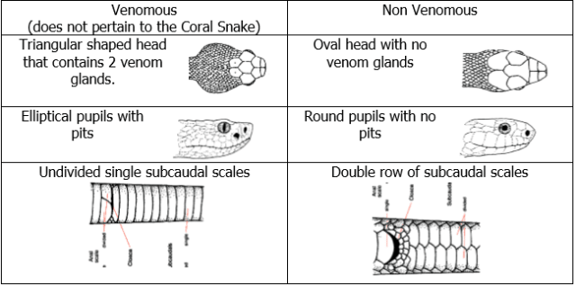 FALSE Venomous vs. Nonvenomous snake chart