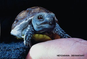 Squirtle as a turtle - real life pokemon