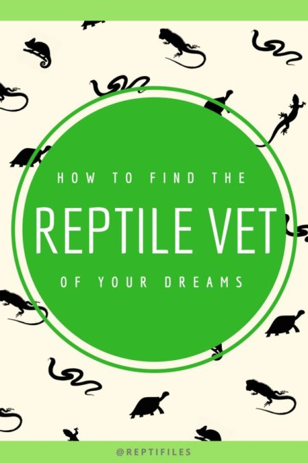 HOW TO FIND THE REPTILE VET OF YOUR DREAMS