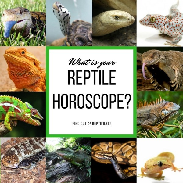 What is your reptile horoscope?