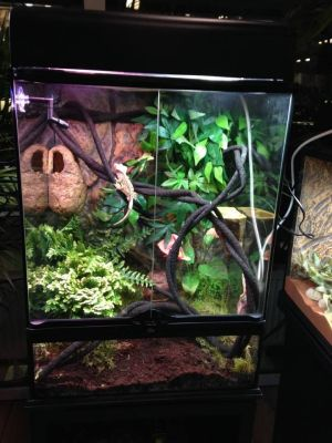 perfect crested gecko terrarium size