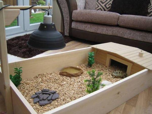 do tortoises make good pets - tortoise table