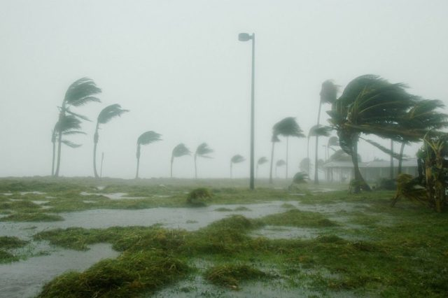 emergency preparedness with pet reptiles - hurricane