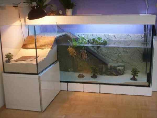 do turtles make good pets - turtle tank