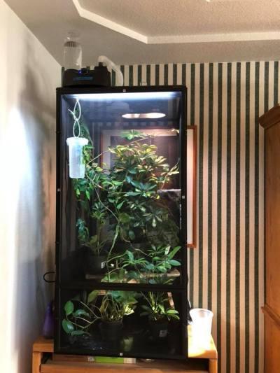 Jackson's Chameleon Enclosure Size Guidelines