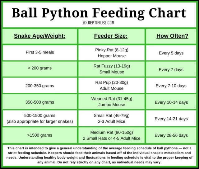 ball python feeding schedule chart
