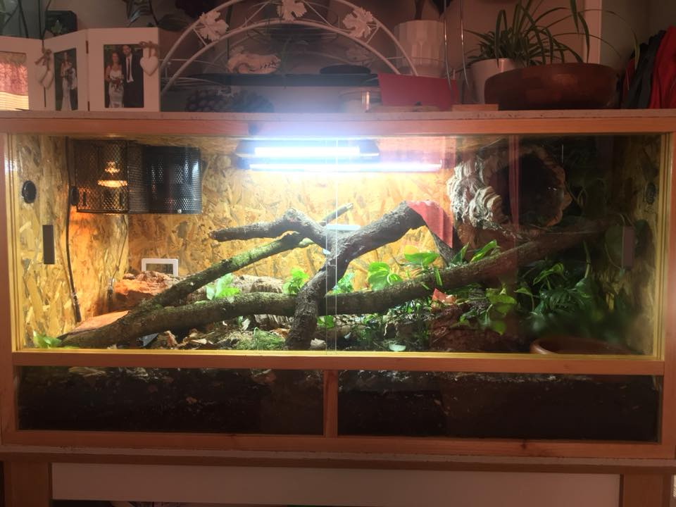 Your Guide To Ball Python Terrarium Decorations Reptifiles