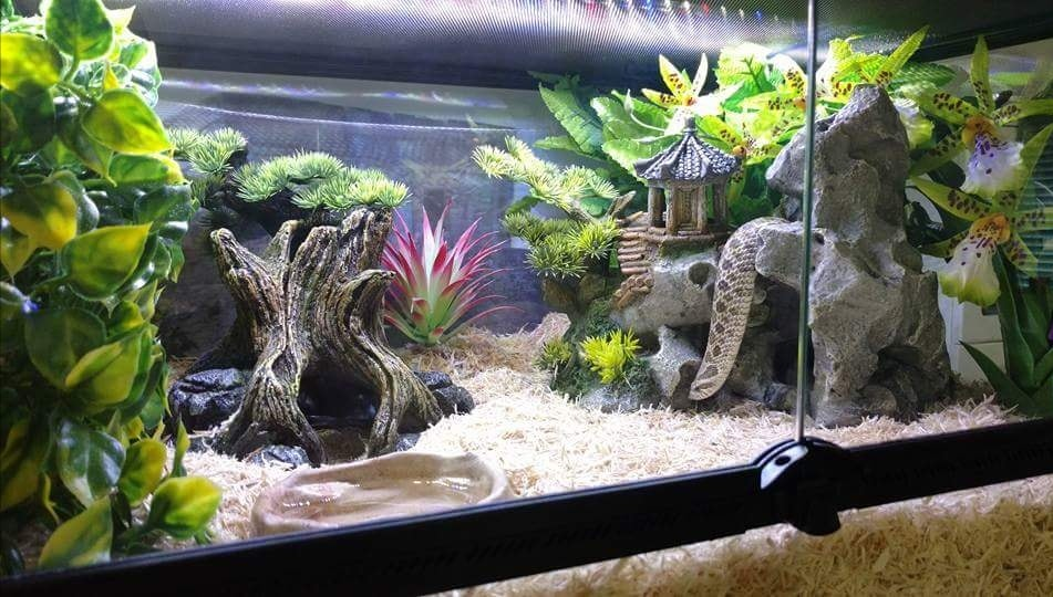 Environmental Enrichment Decorating Your Hognose Snake Enclosure