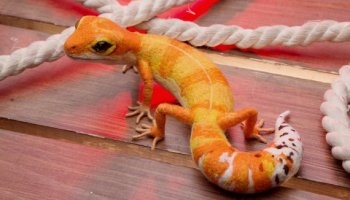 Fire Safety for Reptile Keepers | ReptiFiles