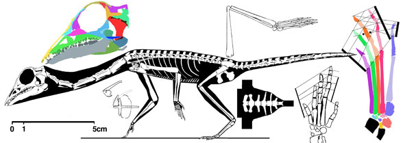 Langobardisaurus tonneloi