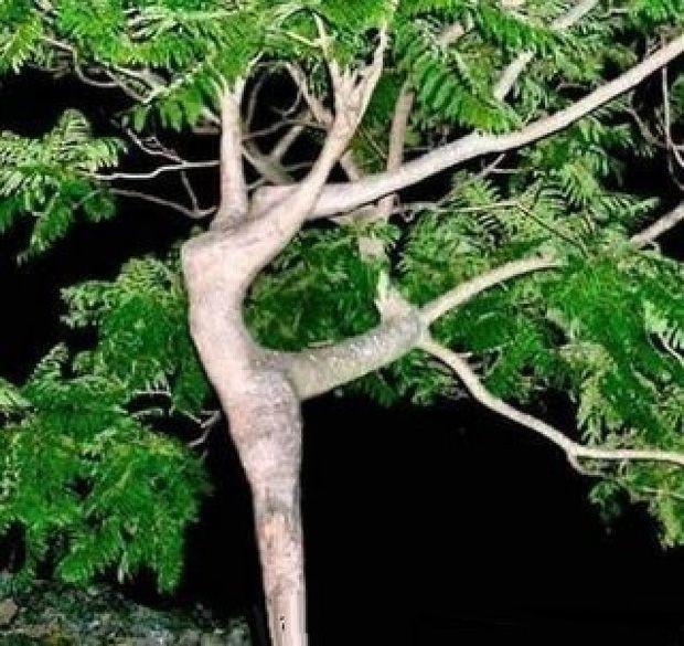 {B}Alberi folli, quando la natura si diverte {/B}
