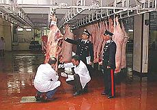 Diossina, l'Irlanda conferma contaminati anche i bovini