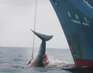 La guerra del Giappone contro Moby Dick