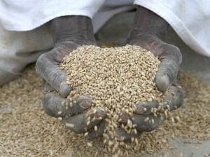 """Oxfam, una sfida piena di speranza """"Coltivare cibo per tutti si può"""""""