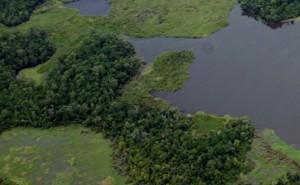 'Così cresce la deforestazione' il paradosso dei biocarburanti