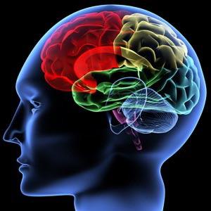 Un cortocircuito di informazioni È nel cervello il segreto dell'ansia
