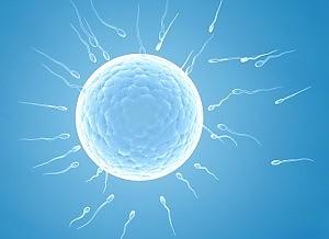 Incinta grazie ad autotrapianto di tessuto ovarico