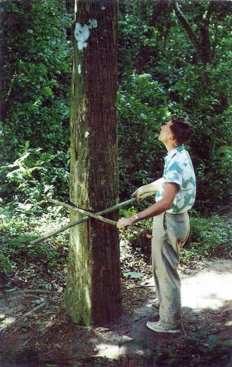 Panama: il mistero della valle degli alberi quadrati