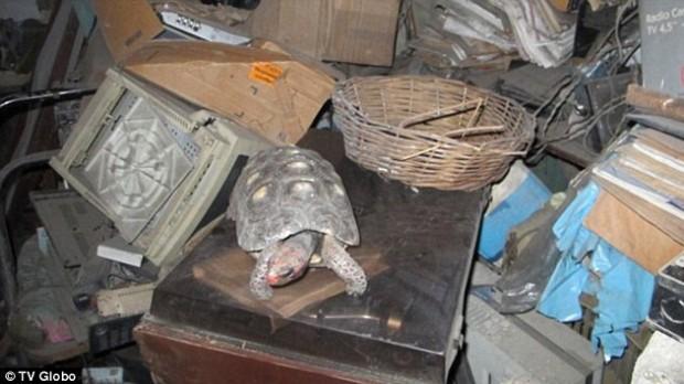 Dal ripostiglio spunta Manuela, la tartaruga persa 30 anni fa