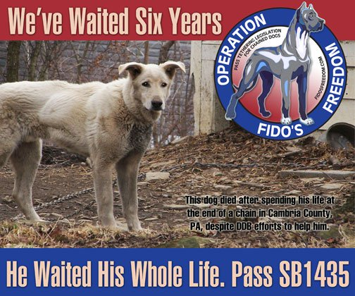 "Dogs Deserve Better poster on ""Operation Fido's Freedom"" legislative campaign"