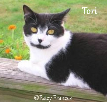 The cat who found us: Tori's story