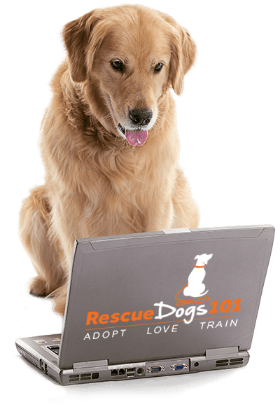dog looking at computer of free resources