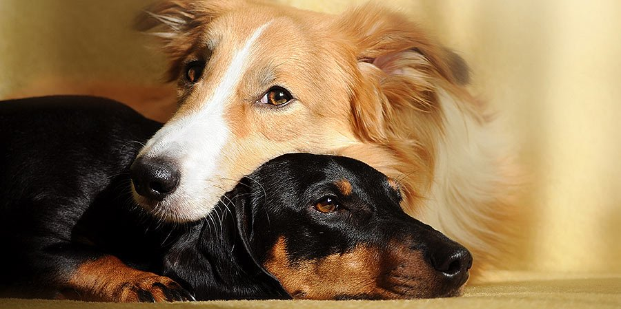 bring your dog home from the shelter - Two dogs sleeping together