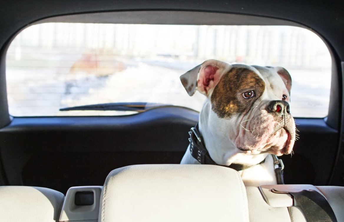 perro sentado atrás sentarse mirando estresado