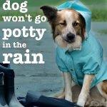 El perro no orina ni hace caca bajo la lluvia (¡Problema resuelto!)