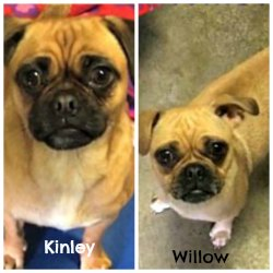 Willow and Kinley (ADOPTED)