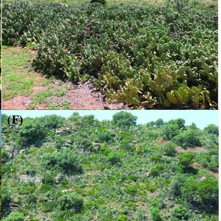 Pdf Global Actions For Managing Cactus Invasions