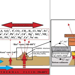 (PDF) Deep-sea and shallow-water hydrothermal vent ...