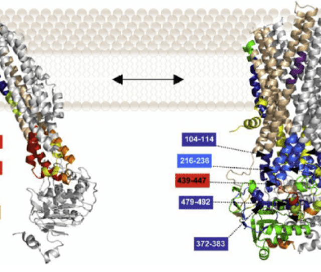 The Bmra Structure Was Switched From The Open Left To The Closed Right Conformation By The Mutation E504 190 The Structures Shown Are 3d Models Of