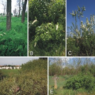 Pdf The Occurrence Of Spiraea Crenata And Other Rare Steppe
