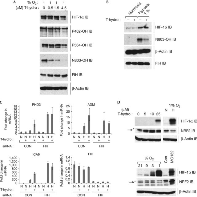 Peroxide Increases Hif Target Gene Expression In An Fih Dependent