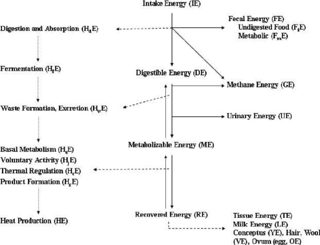 Schematic partition of energy in the animal (NRC, 1981 ...