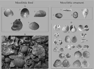 Comparison between shells used as food and ornament during