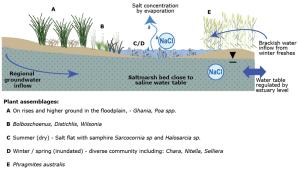 Conceptual Model of Coastal Salt Marsh ecological and